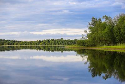绿色森林与平静的河流和自然的倒影