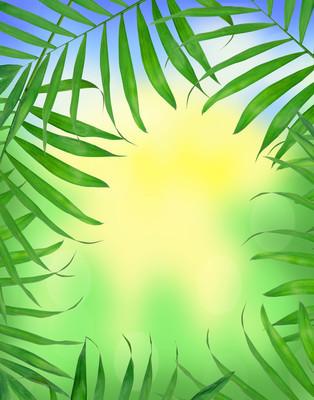 在明亮的自然背景的蕨类植物绿叶