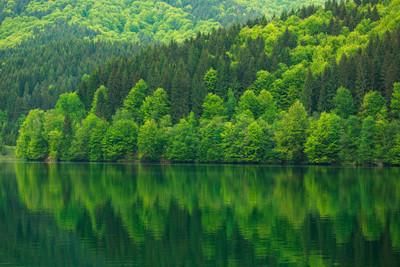 绿色森林的自然反射水美丽的湖