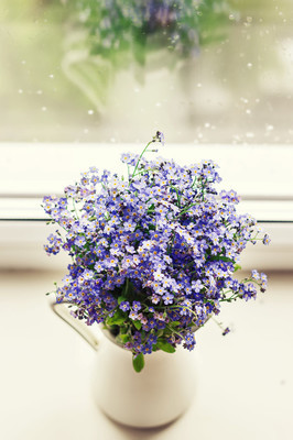 Forget-me-nots  in jar on white window sill.