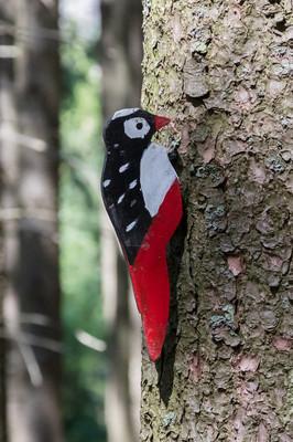 在森林里-等待着被 spotte 的木制啄木鸟教育