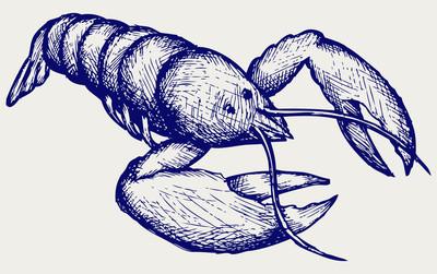 小龙虾素描