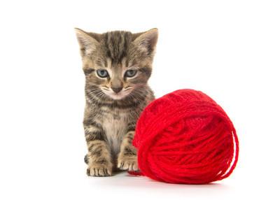 可爱的虎斑猫咪