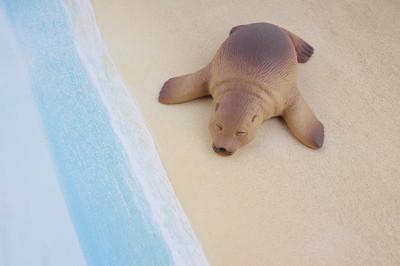 塑料海狮玩具与图
